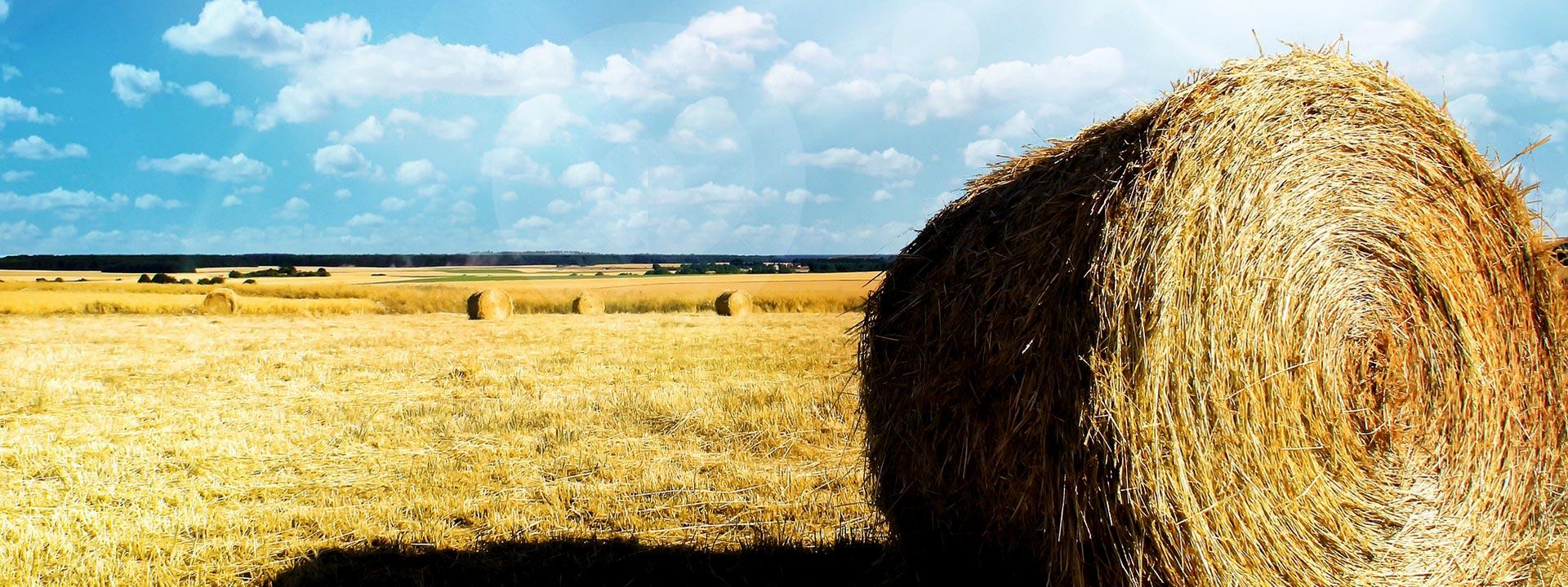 Azienda agricola biologica valentini produce legumi farine for Puoi ottenere un prestito per la terra